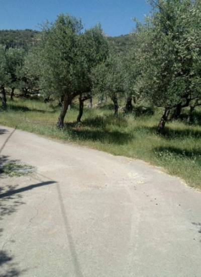 Plot with building permit - 20.000 euro