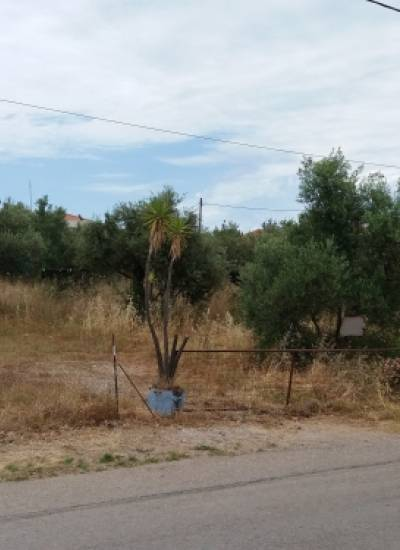 One of the few pieces of land below the main road close to Stoupa beach