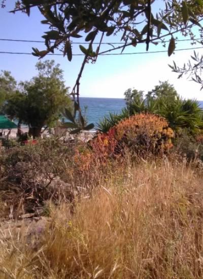 4.000sq m land next to Pantazi beach Agios Nikolaos